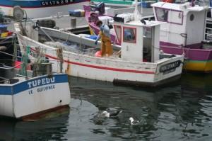(Tout) petit bateau de pêche