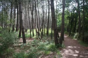 Un petit détour par la forêt des Carnutes